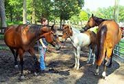 Students caring for horses in equine program